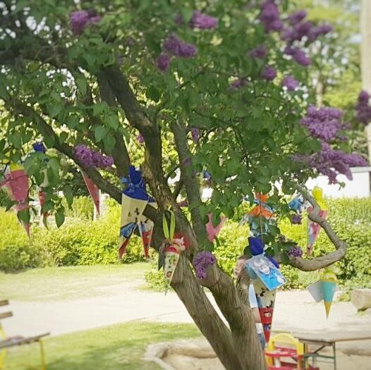 Zuckertütenbaum – hier wachsen die Zuckertüten